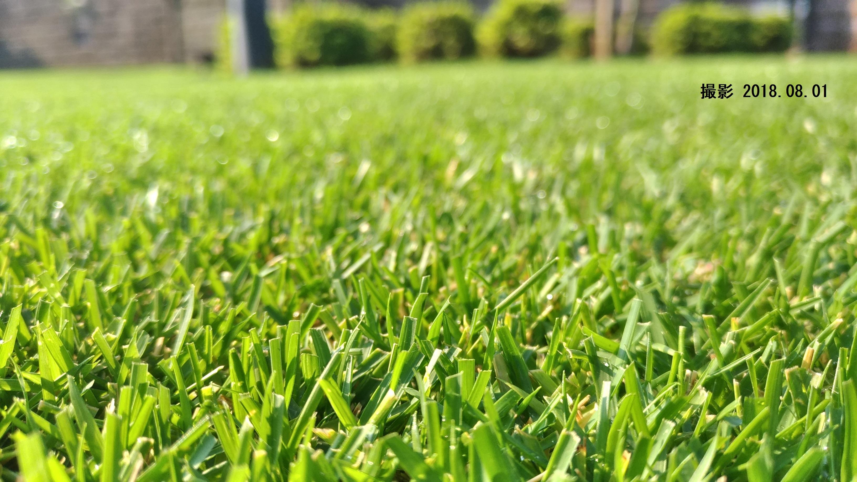 芝生(8~9月)の成長ぶりを写真で振り返ろう😃✨
