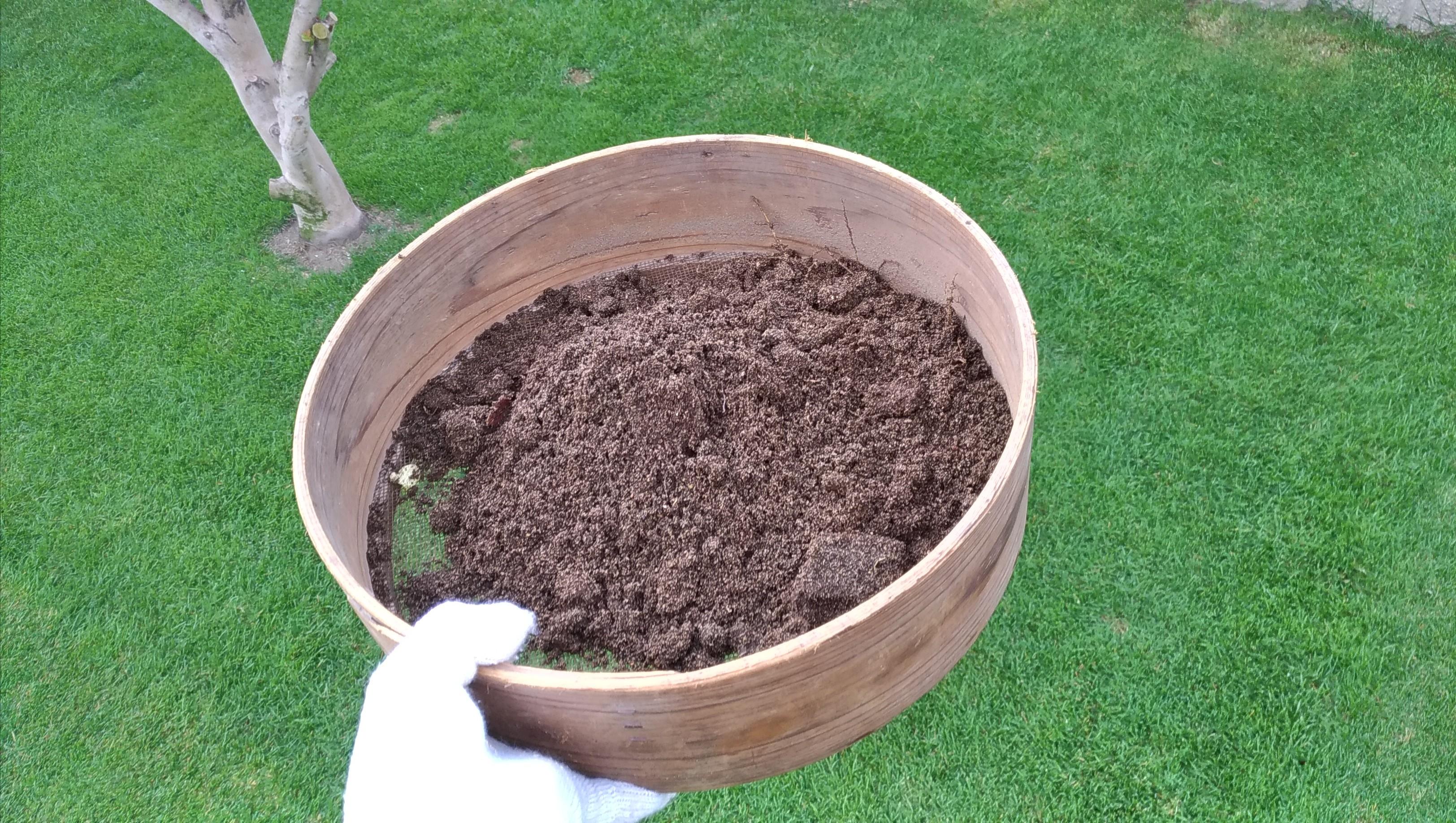 シオヤアブの幼虫&芝張り箇所に目砂撒き😃✨