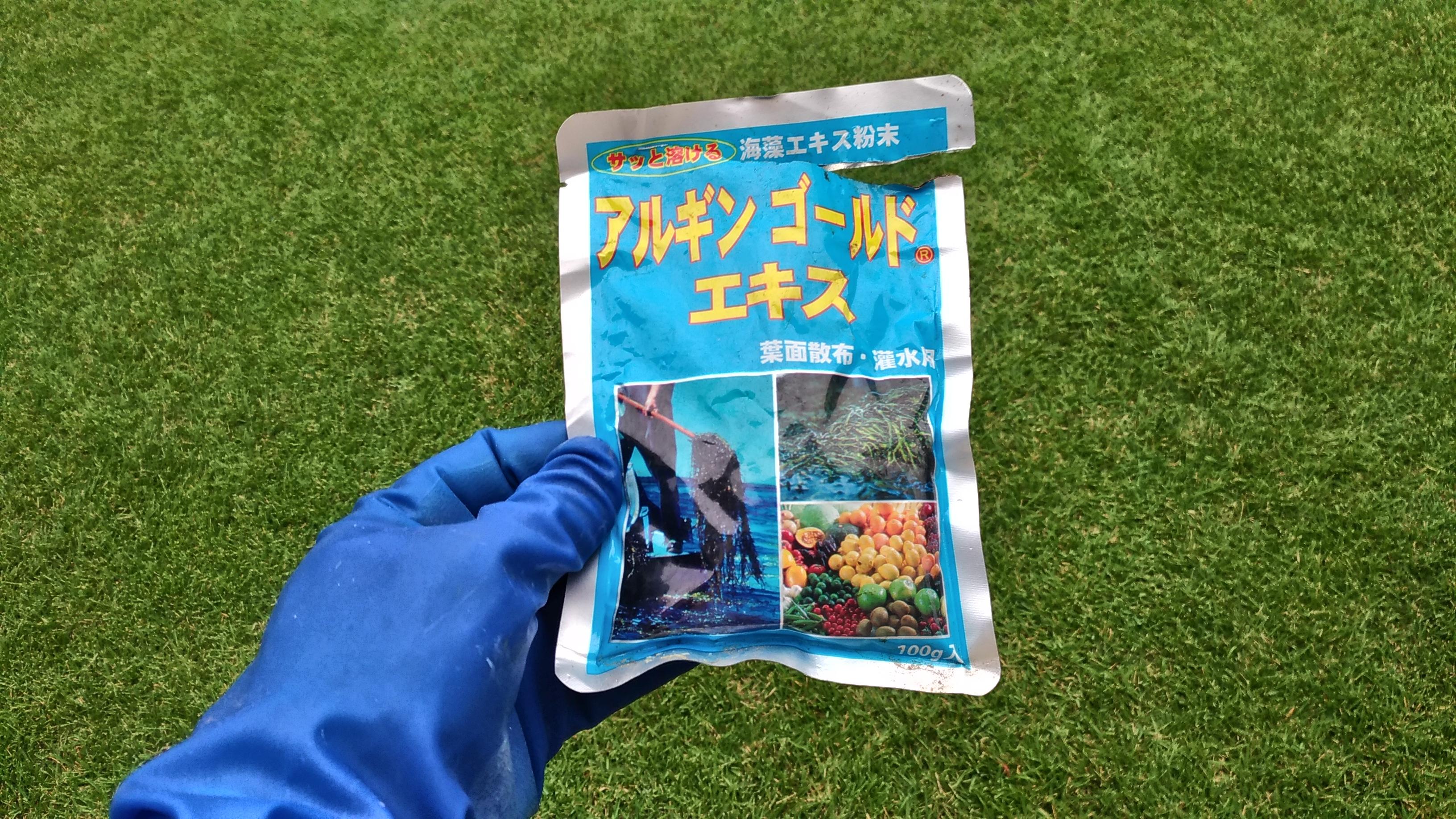 アルギンゴールドエキスで微量要素を投入して芝生を元気にしよう&茶色の手乗りショウリョウバッタ😃