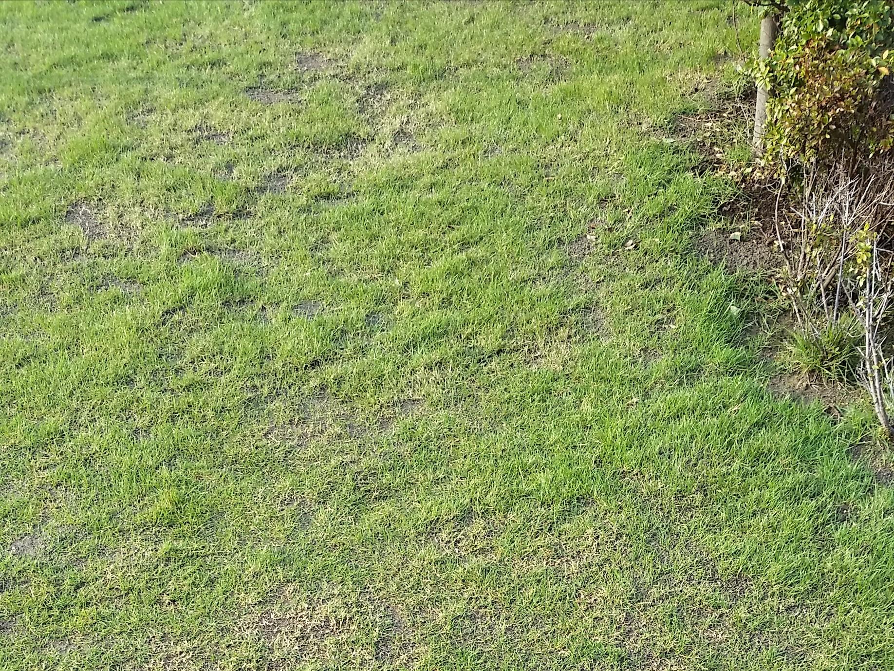 荒れた芝生の悩みから抜け出す思考法😃✨