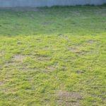 芝生が青くならない!原因と対処法😃✨