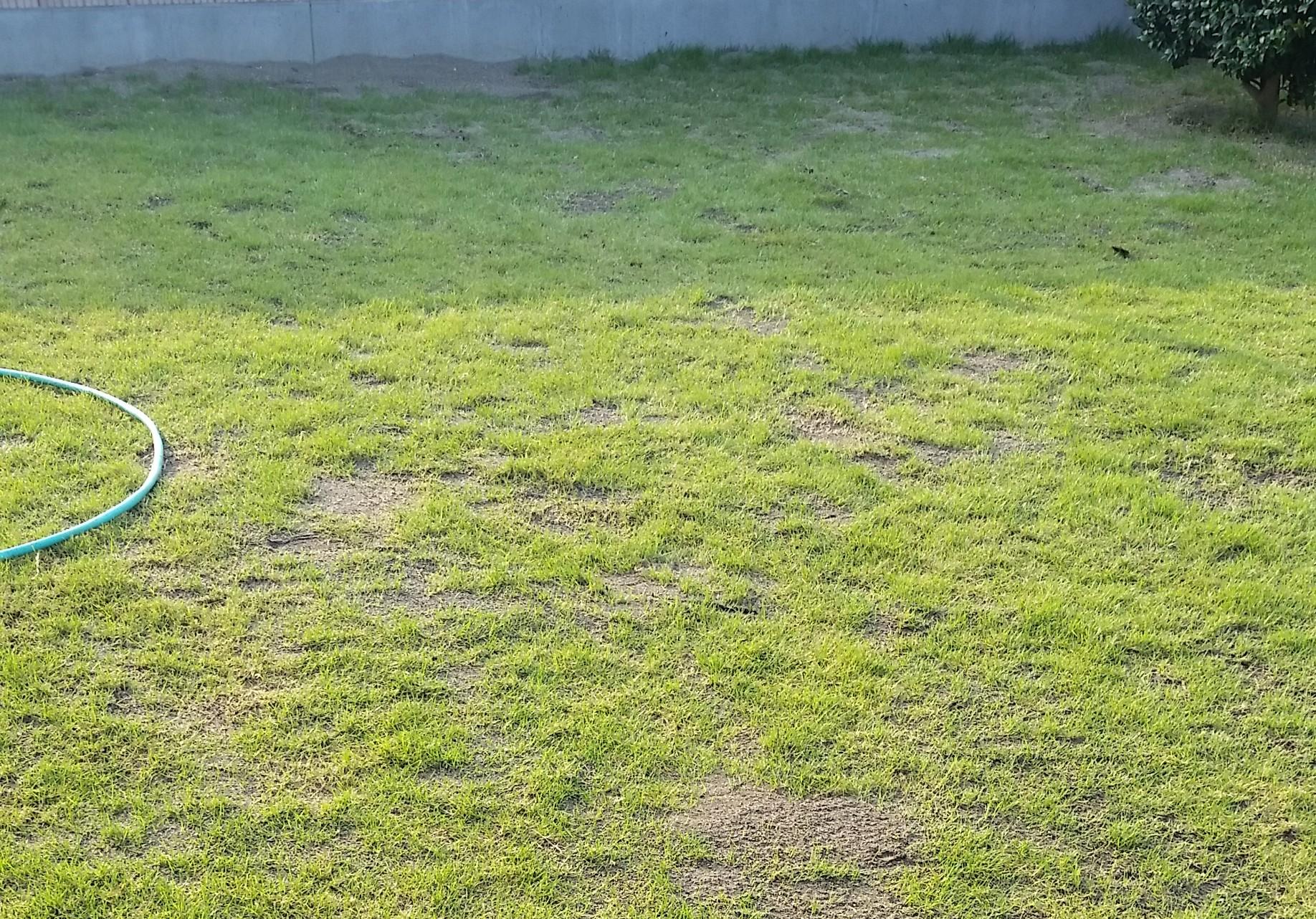 荒れ放題の芝生を復活させる方法を分かりやすく解説😃✨