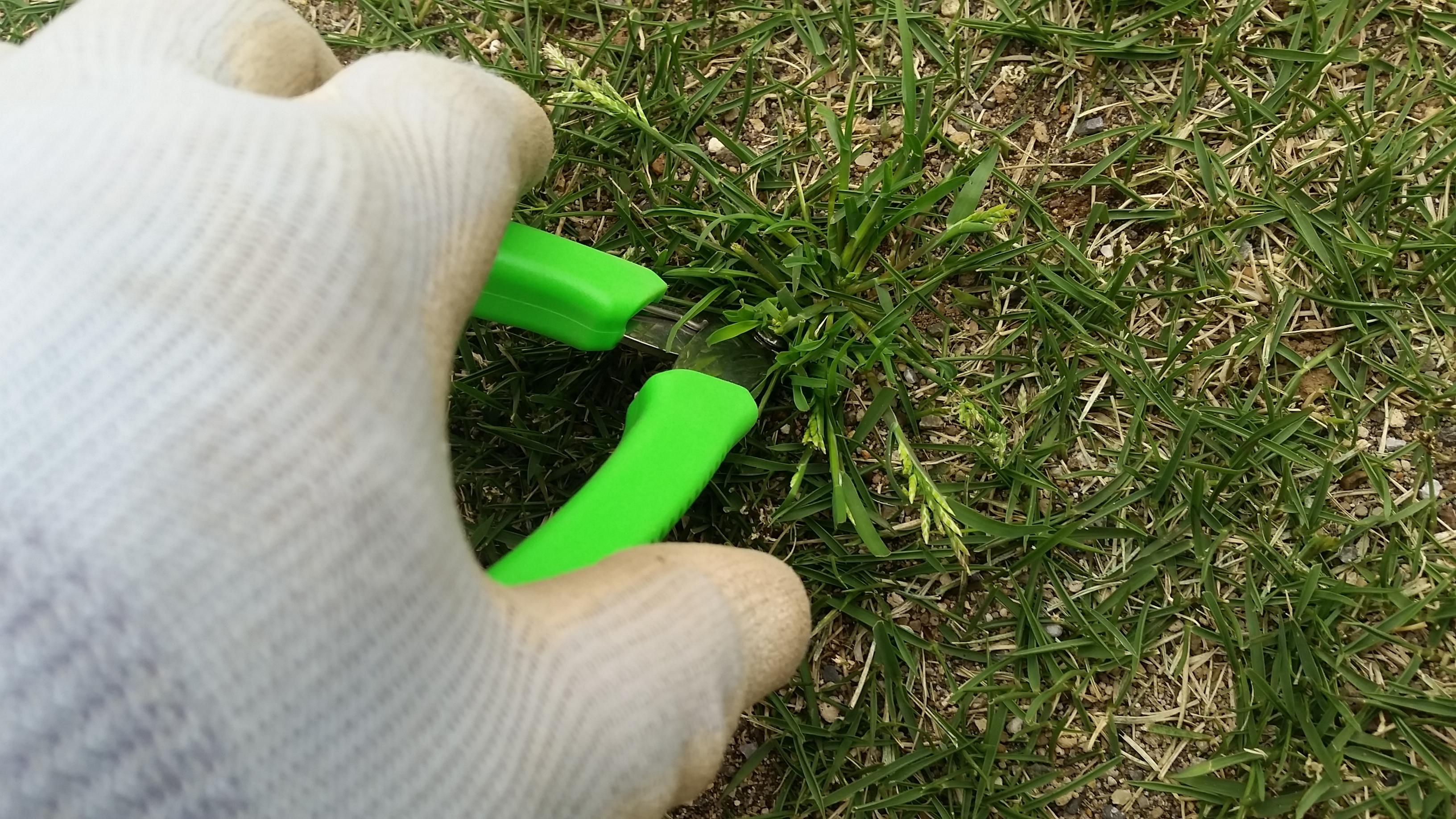 芝生の雑草対策ベスト3😃✨