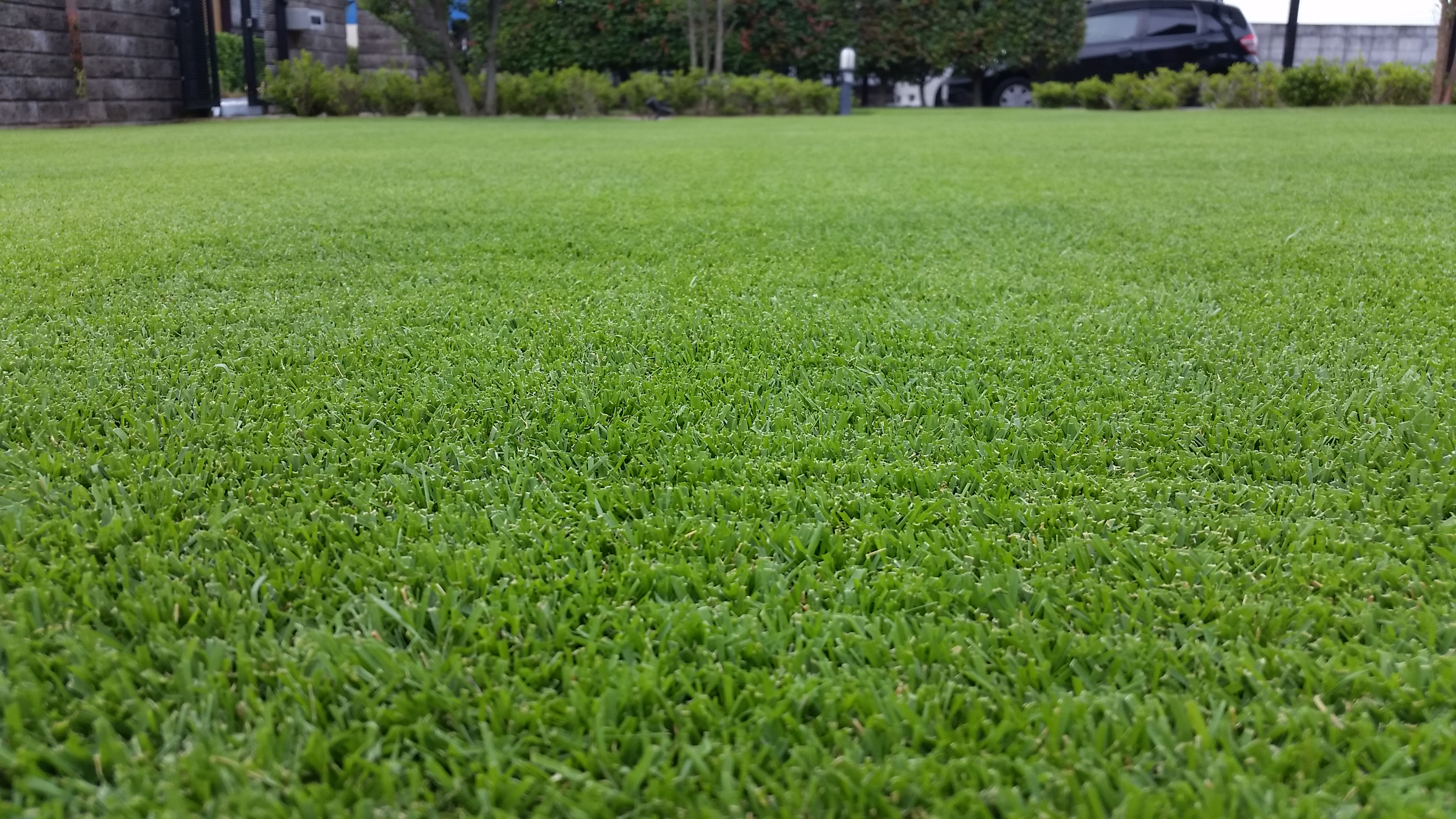 経験から分かる芝生の密度がグングン上がる方法😃✨