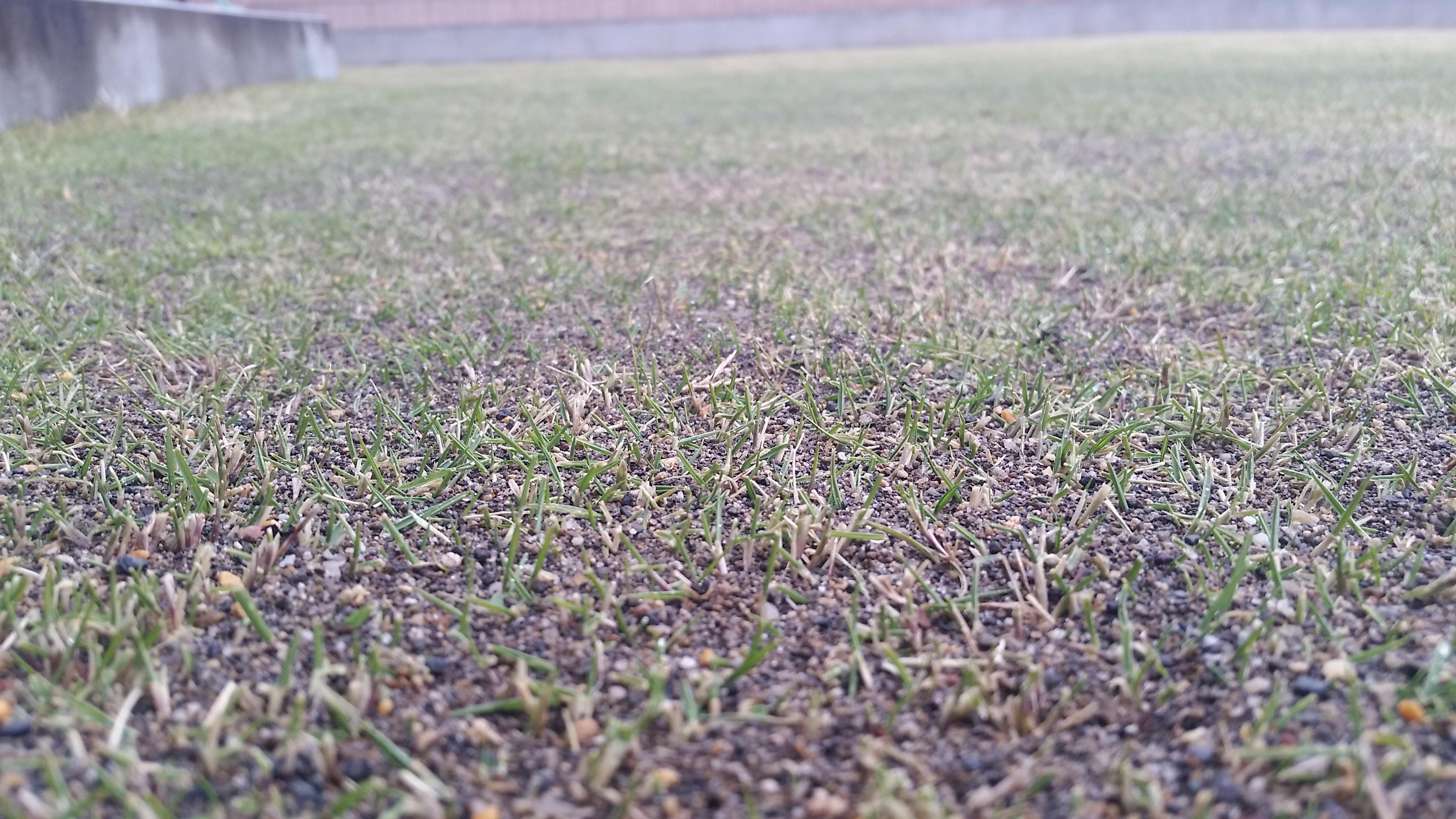 芝生が緑になる時期😃✨
