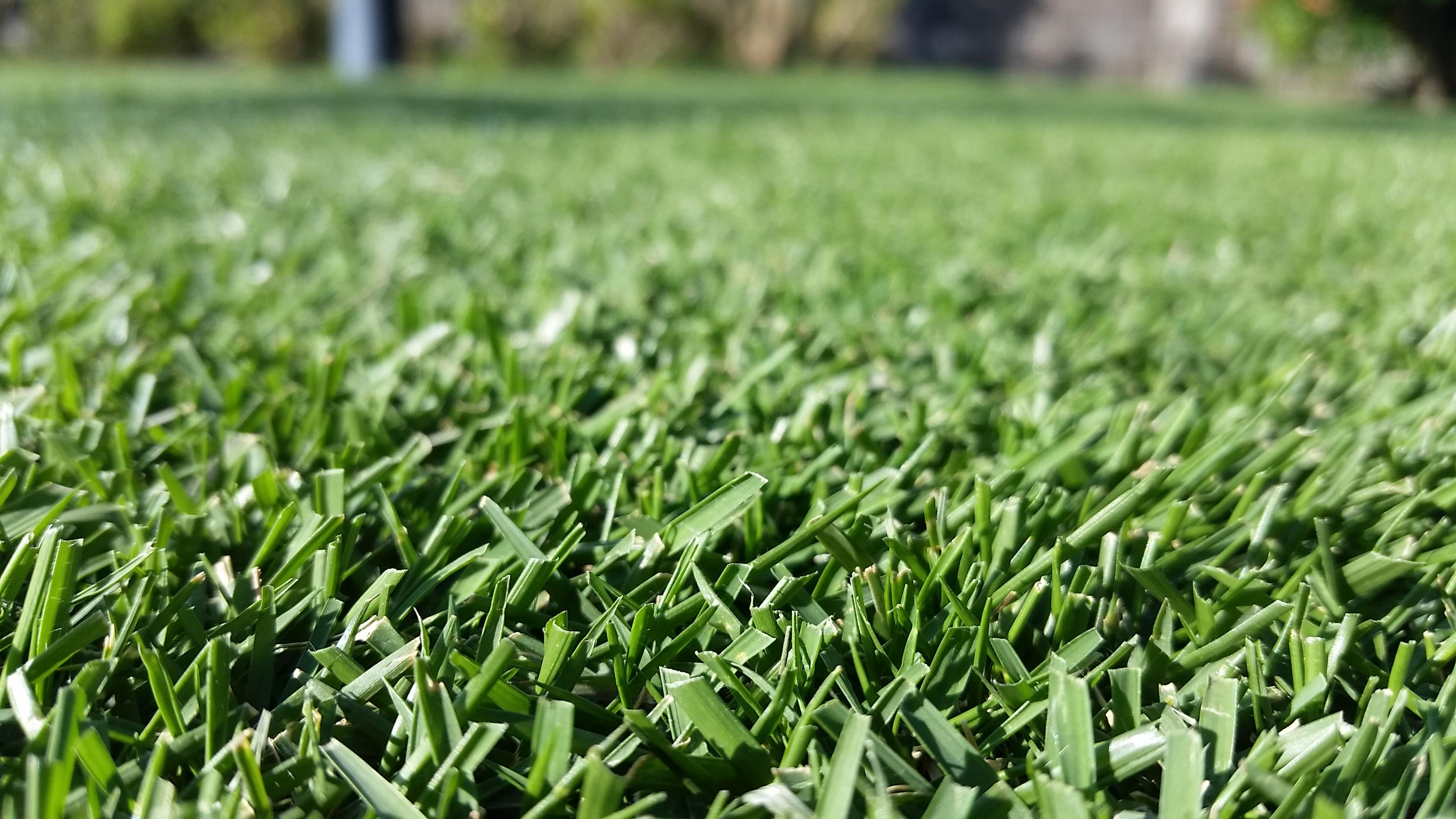 芝生の長さの決め方😃✨