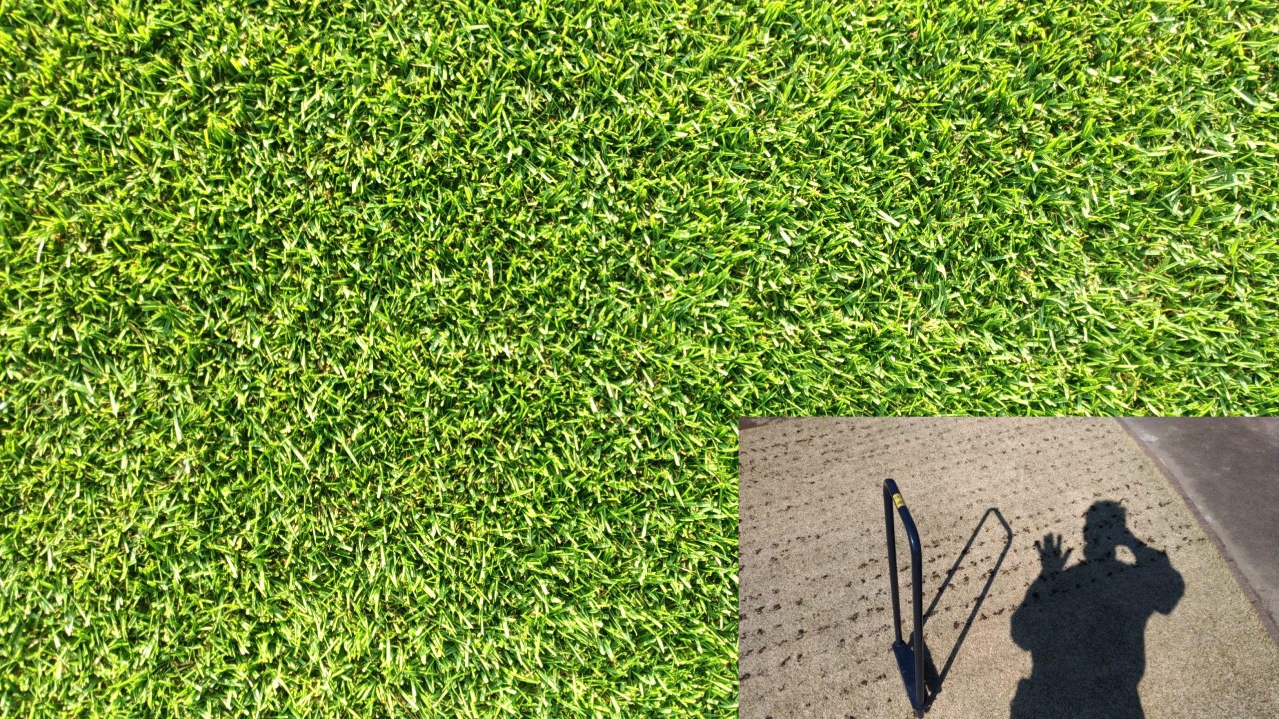 スタート時期が大切!芝生の更新作業で芽吹きを早めよう😃✨