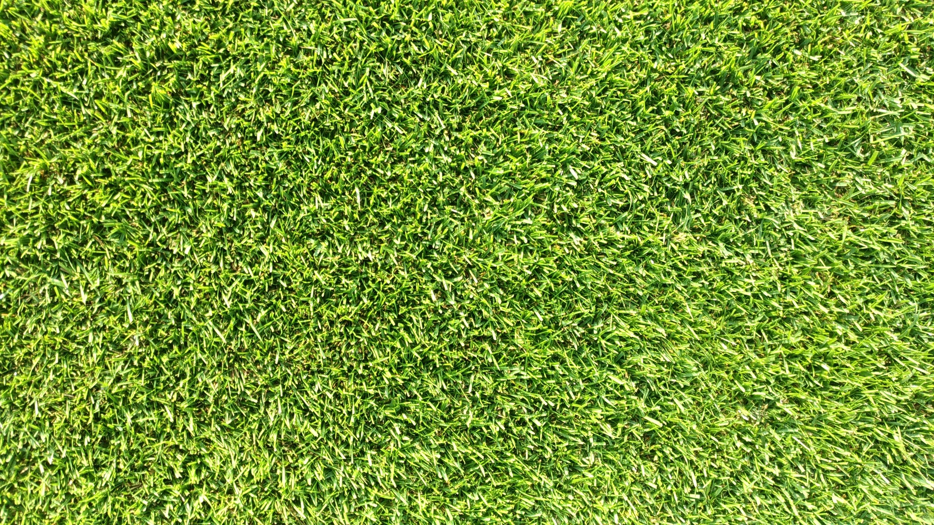 芝生の生育条件として必要な4つのこと😃✨