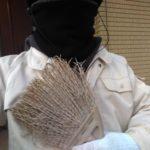 風速7mの強風に負けじと芝生の掃き掃除!結果はショボン😣💦