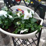芝生を飾るハンギングプランターに小輪パンジーを植える方法