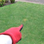 芝生における犬猫の糞尿処理と予防策😃✨