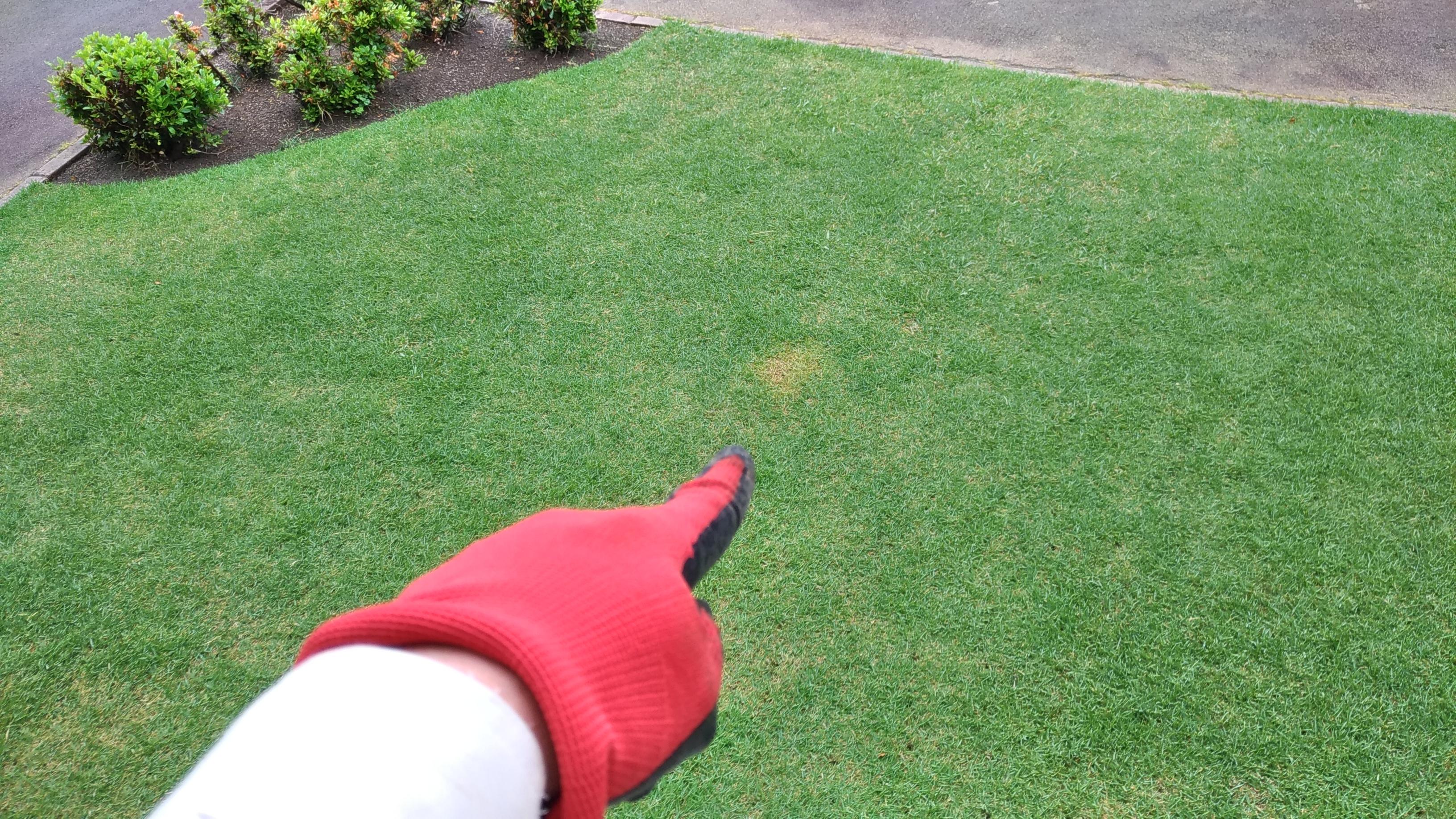 芝生における犬猫のフン尿処理と対策😃✨