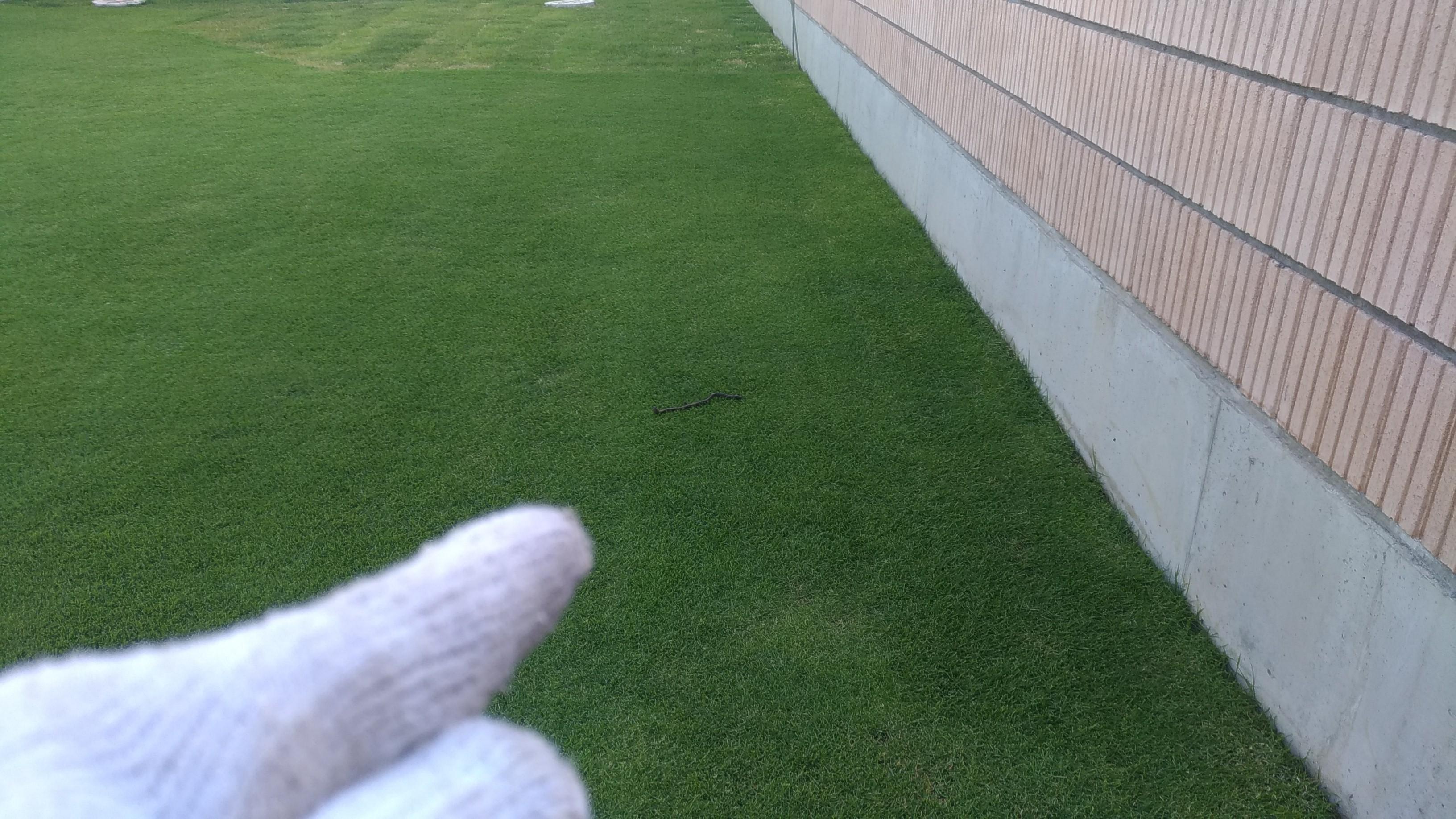 芝生の手入れ!塀際を処理する方法😃✨