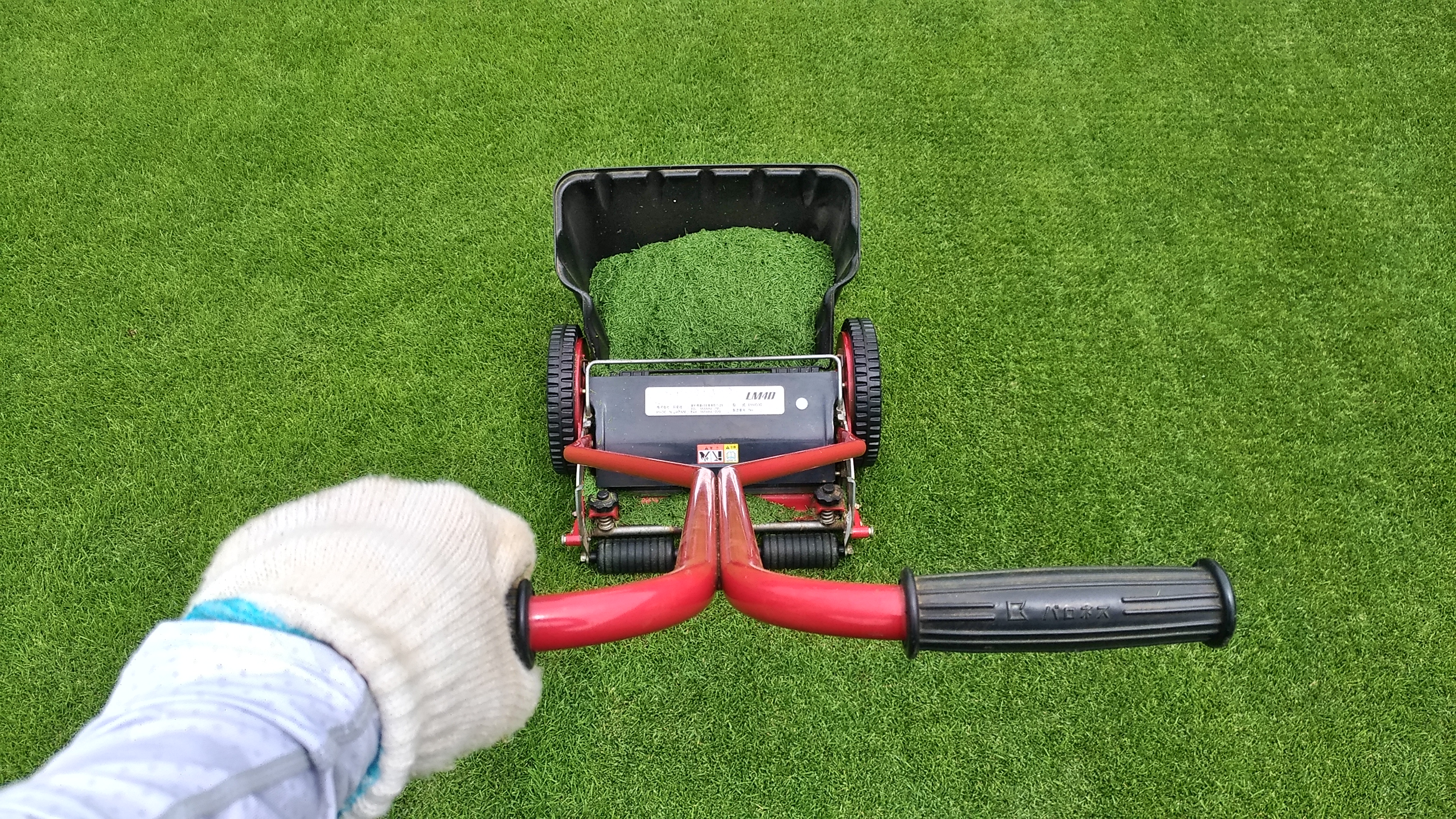 芝刈りを始める時期はいつ😮?
