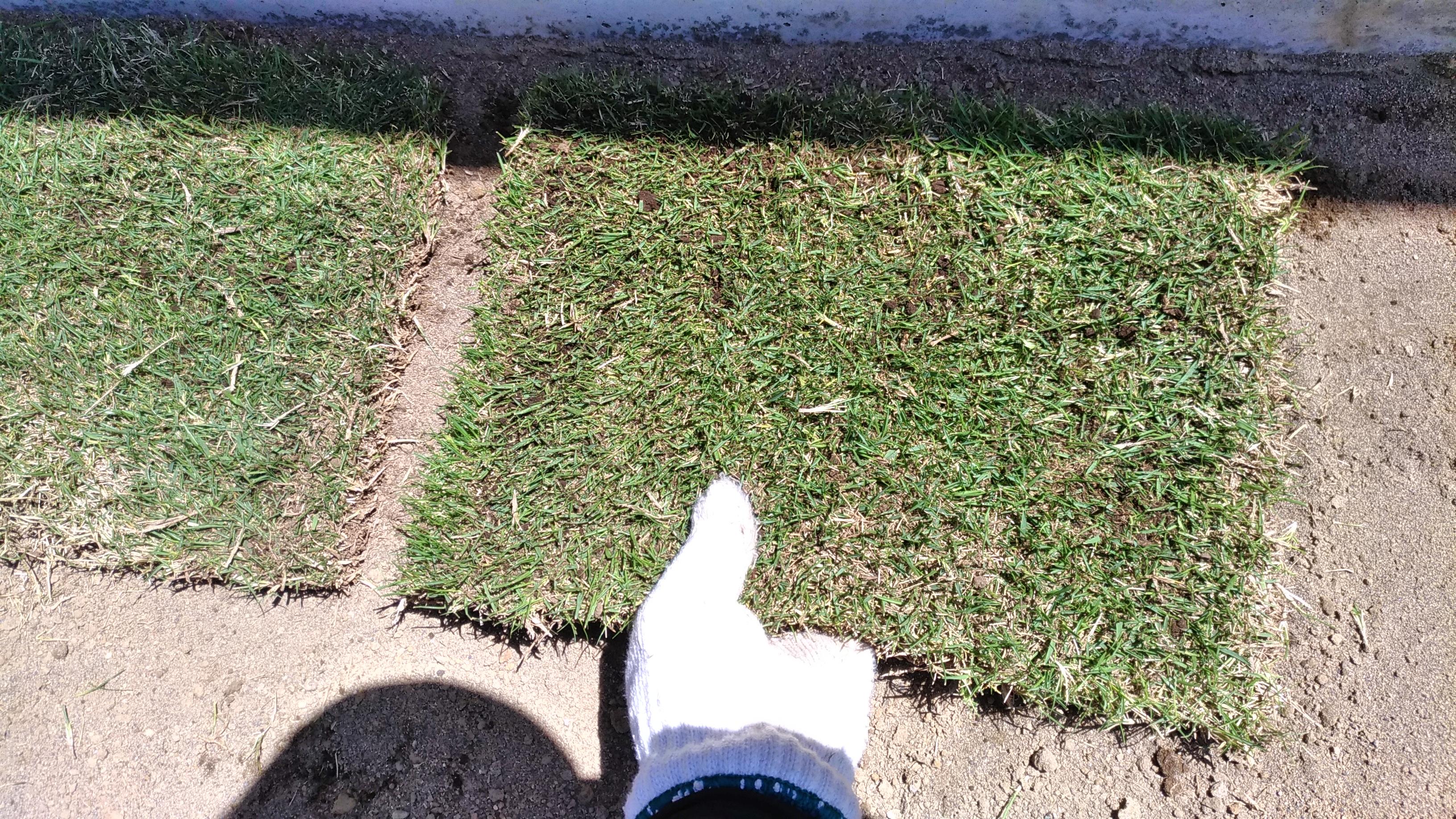 芝生が根付かない時の対策はこれだ😃✨