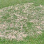 芝生の病気を治す方法😃✨