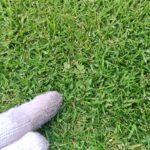 芝生の手入れ!夏雑草を防ぐ方法😃✨