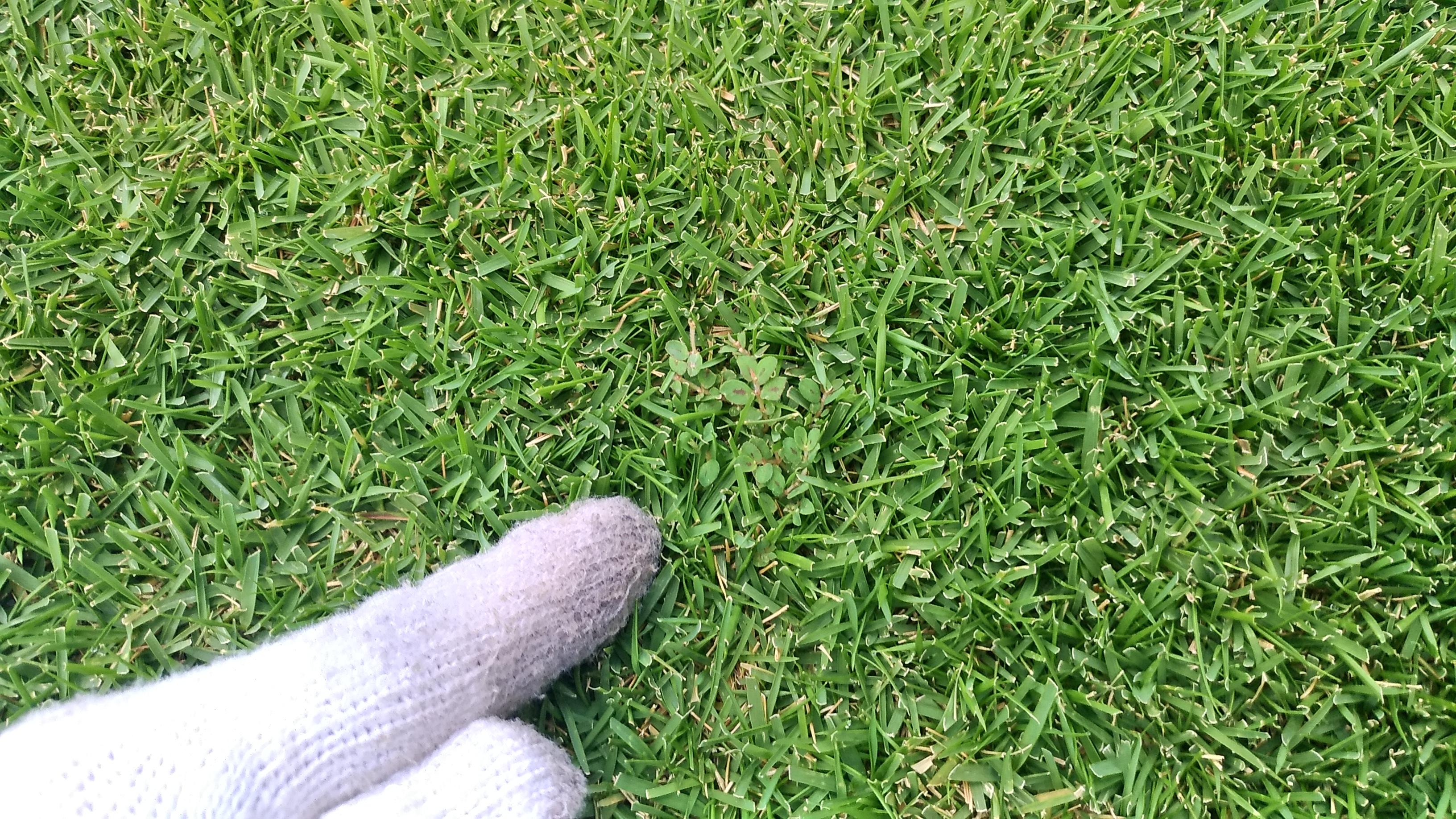 芝生の夏雑草を防ぐ方法😃✨