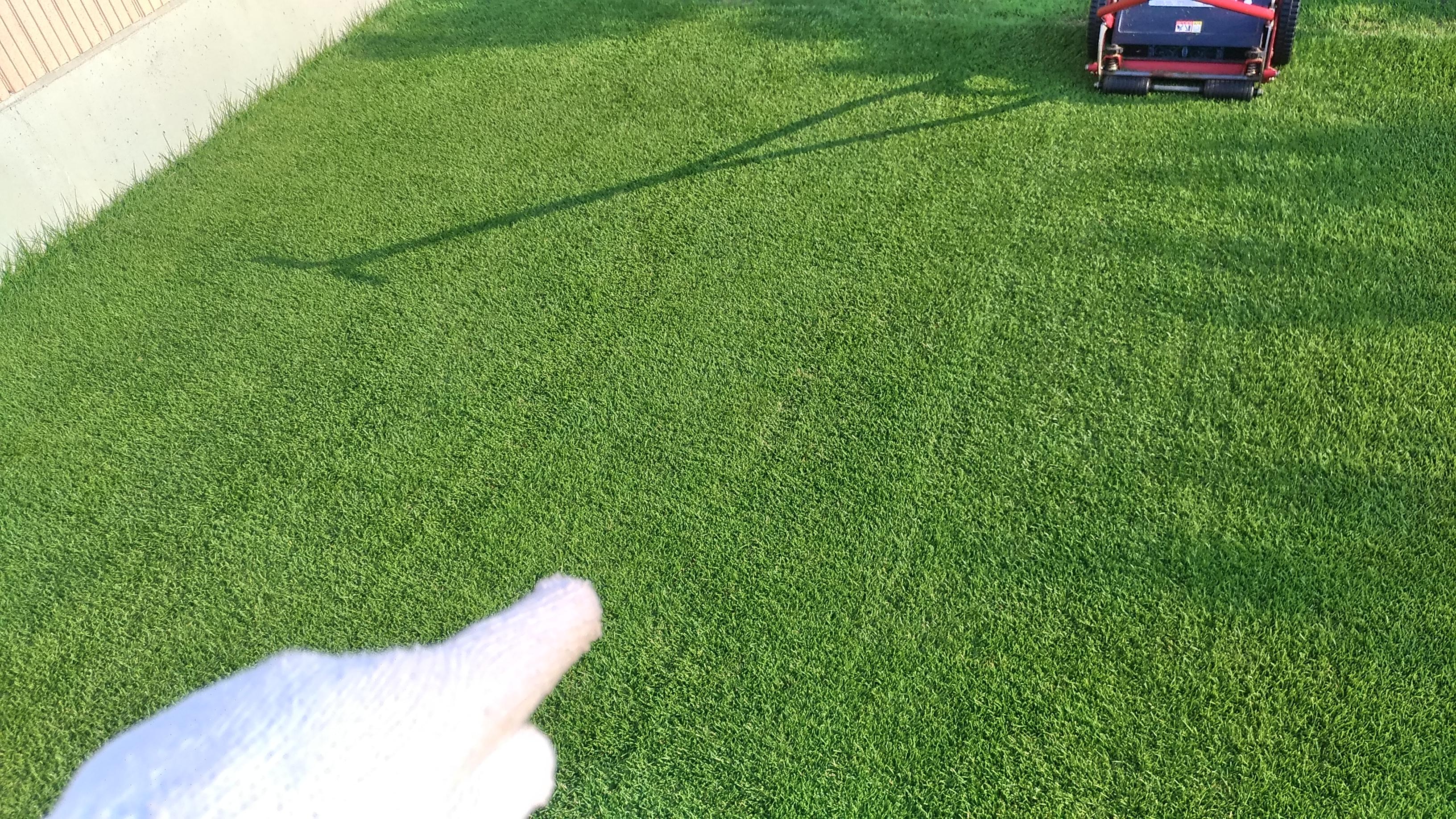 芝刈りの縞模様!クリップ痕は密度の上がった証拠😃✨