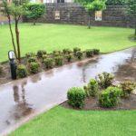 芝生の手入れ!梅雨入り前にすべき作業5選😃✨