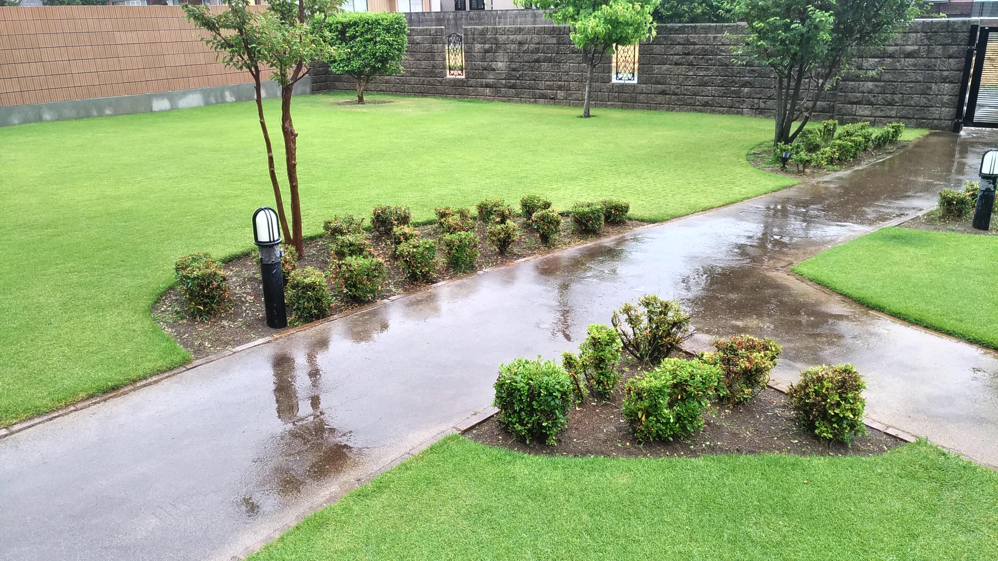 芝生の手入れ!梅雨の前にすべき作業😃✨