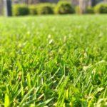 芝生の手入れ!8月に行うべき作業ベスト3✨