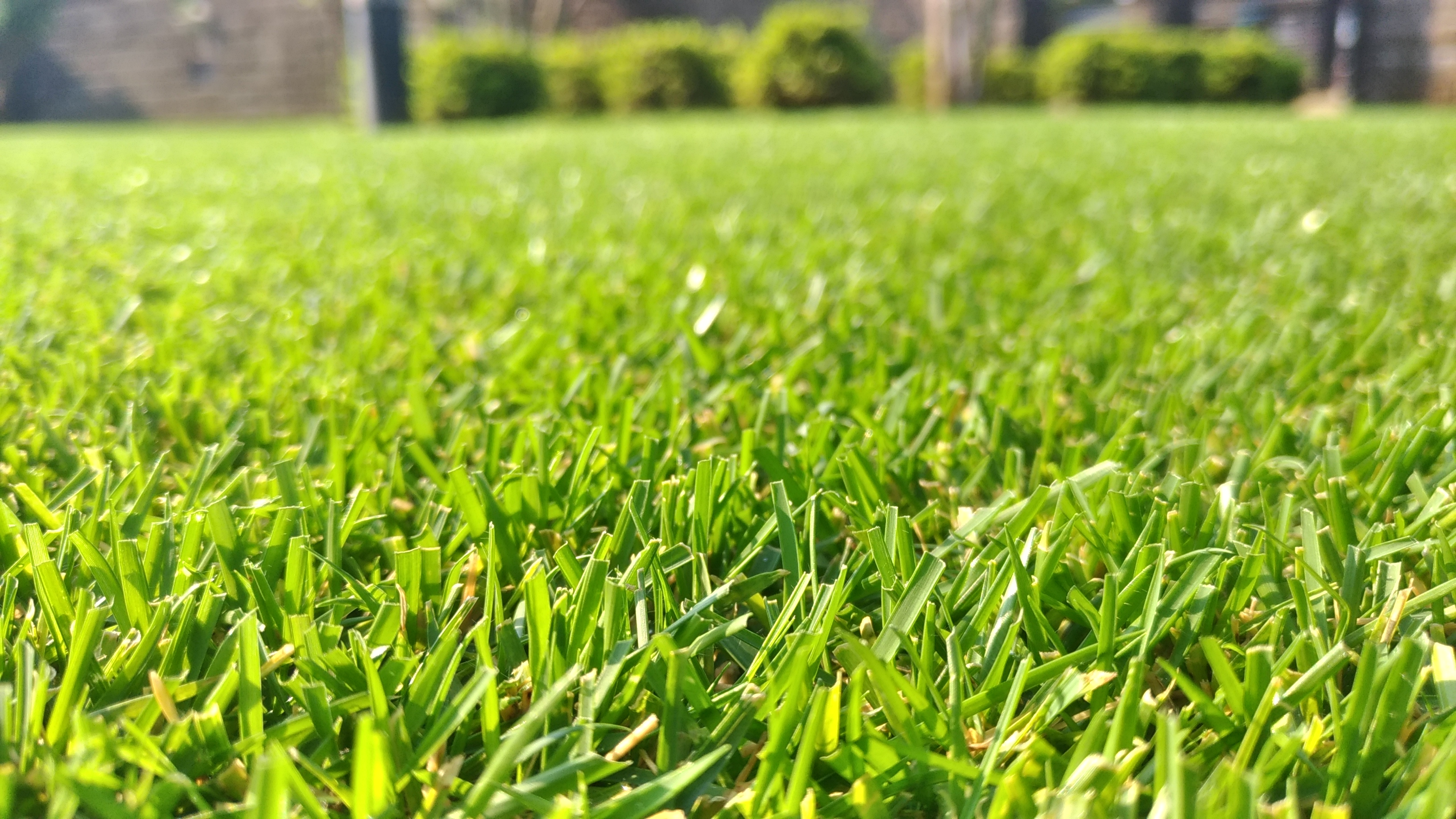 芝生の手入れ!8月に行うべき作業ベスト3😃✨