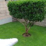 芝生の際刈り!木の周りを丸く切る方法😃✨