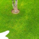 芝生が黄化する原因を分かりやすく解説😃✨