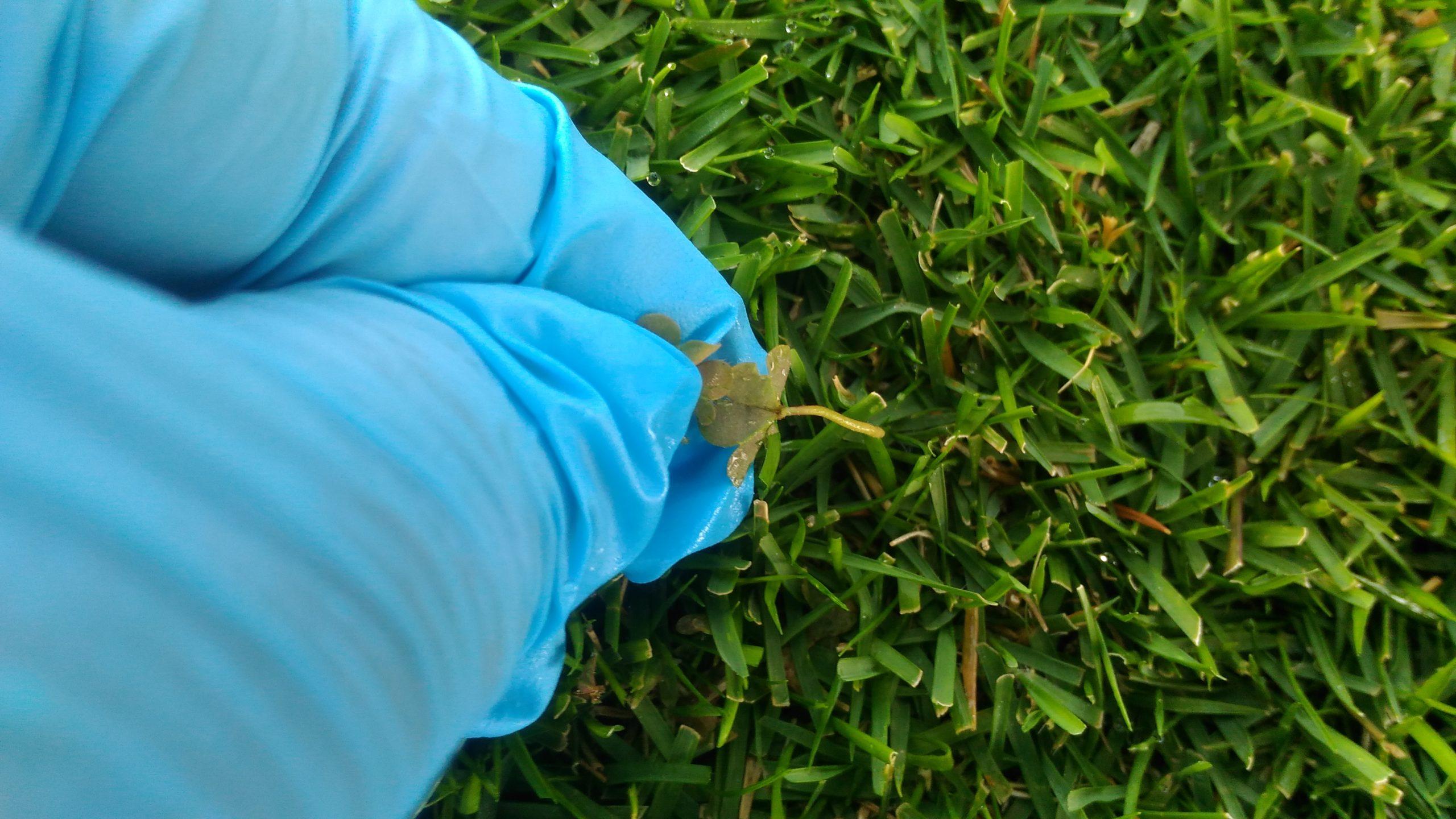 芝生の雑草対策はこれだ😃✨