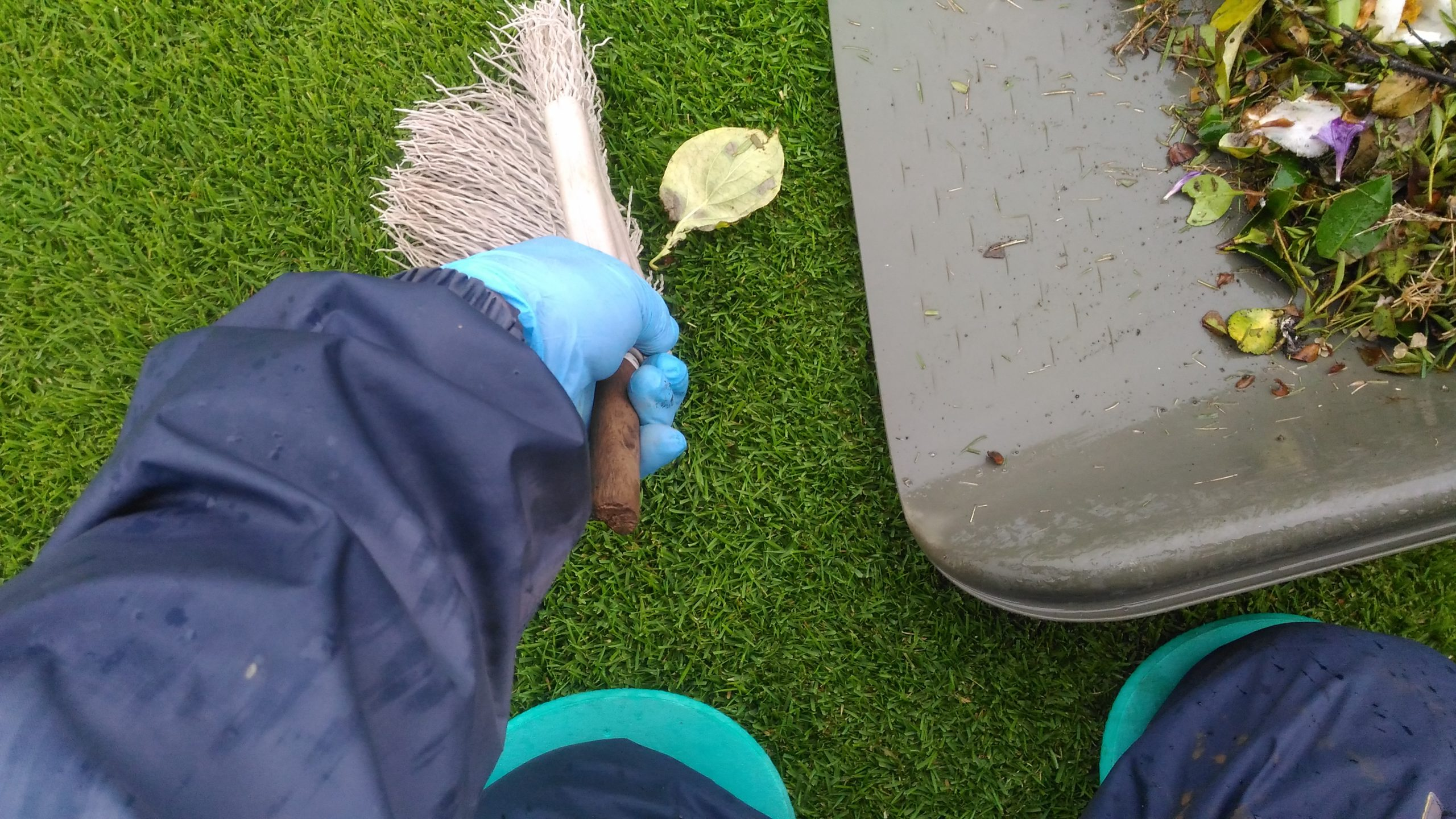 芝生の手入れ!梅雨に気をつけることはこれだ😃✨