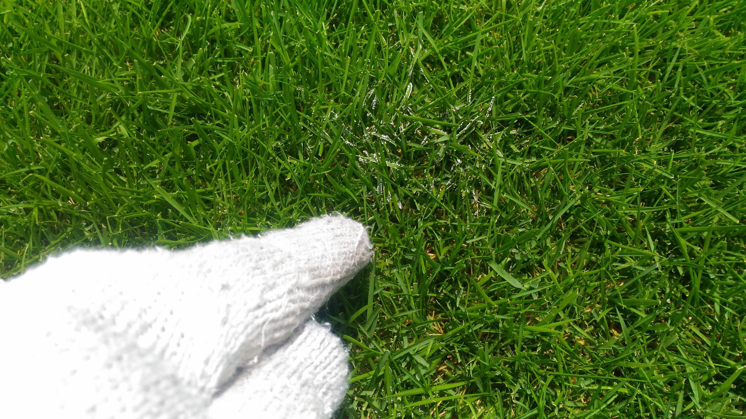 芝生のほこりかび病!殺菌剤や対処方法は😮?
