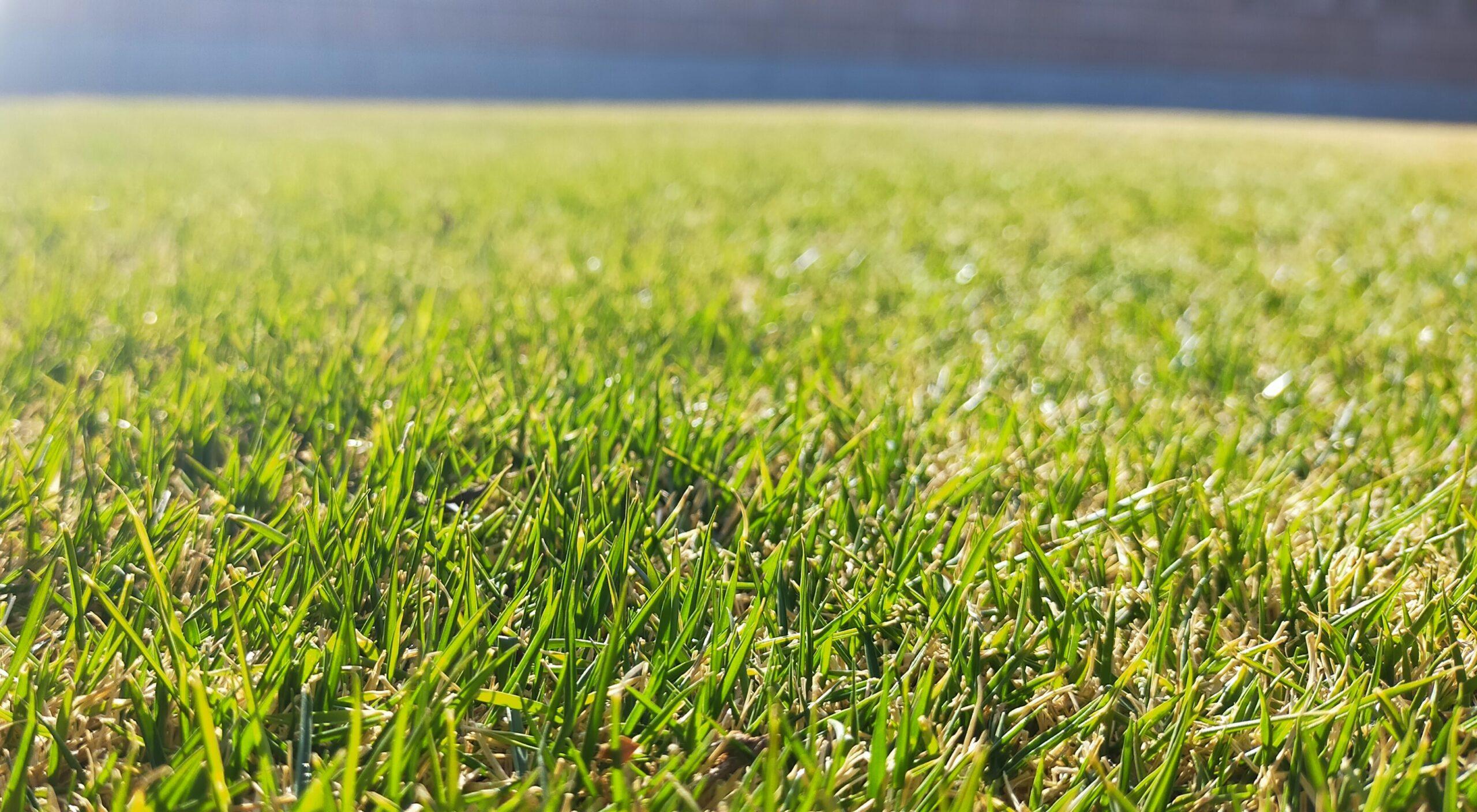 芝生の新芽!やるべき手入れはこれだ😀✨