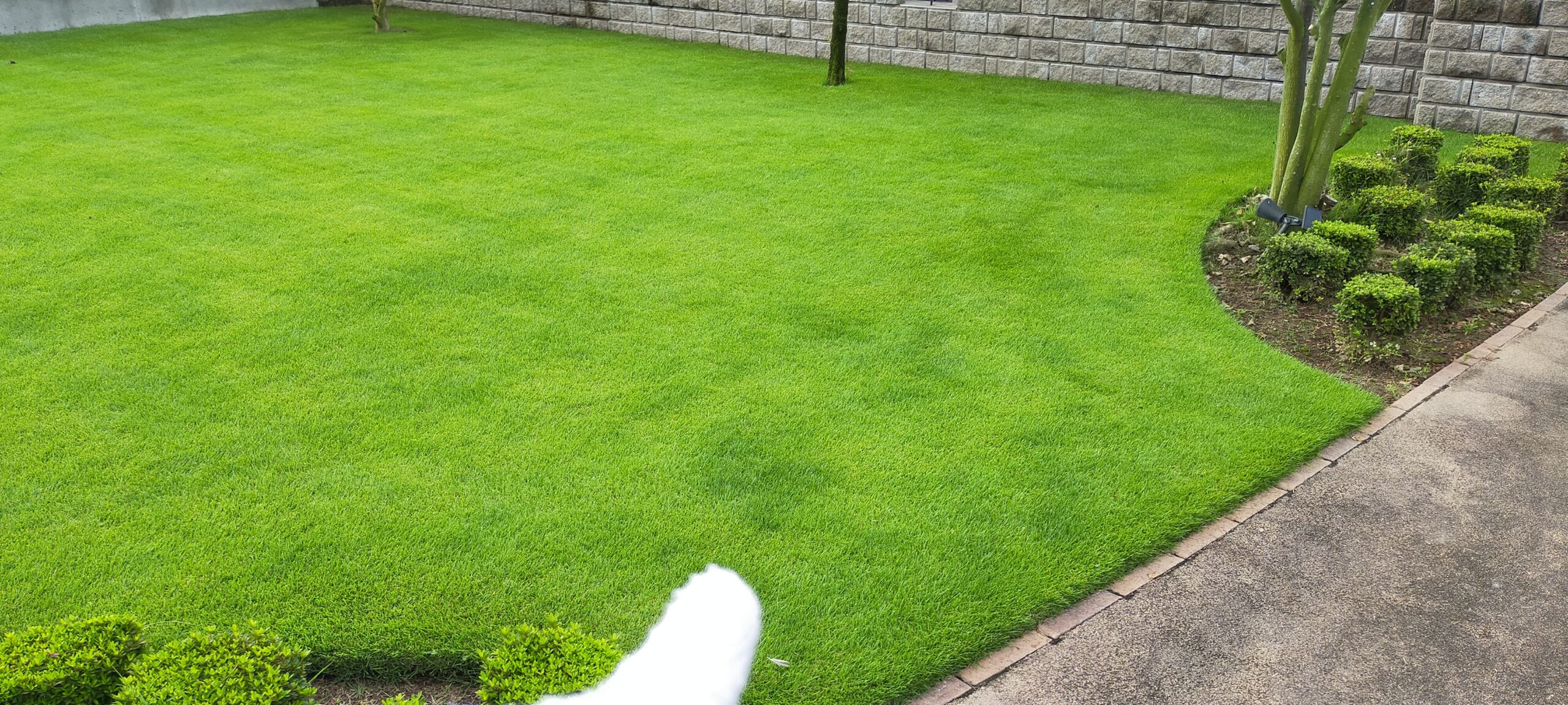 芝生の肥料ムラに気を付けよう😄✨【stand.fm】