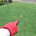 芝生における犬猫の糞尿処理と対策😃✨